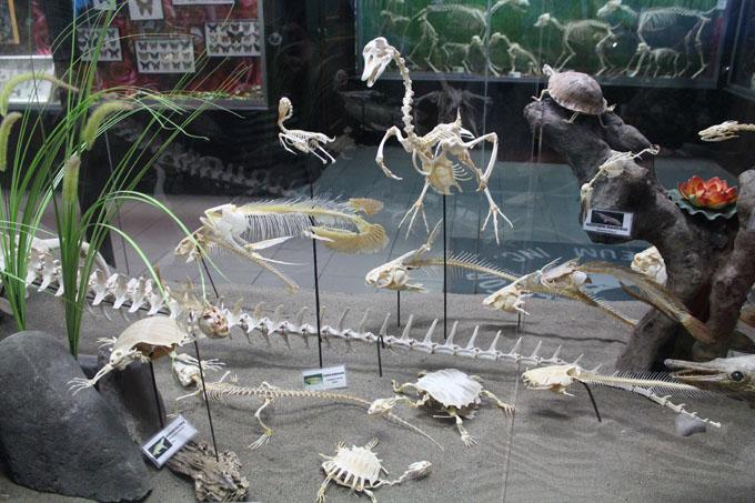 Davao Dbone Museum