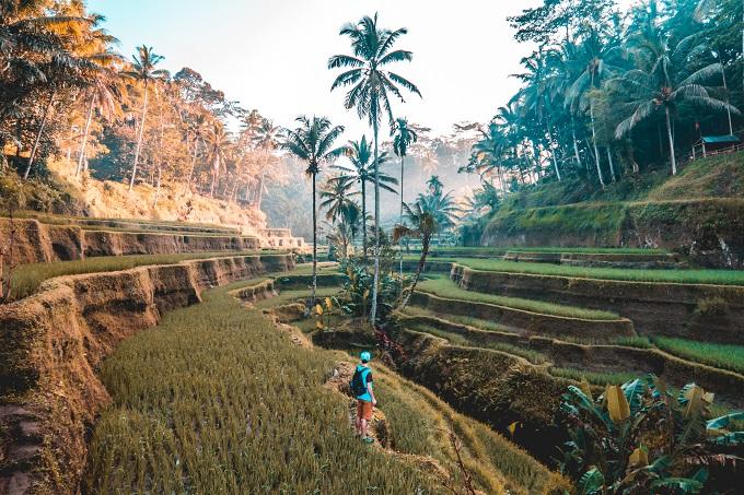 man in rice field